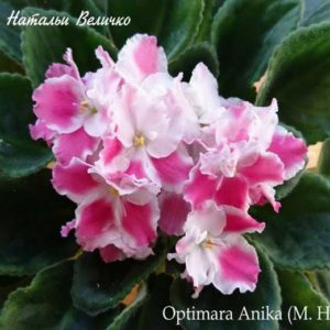 Optimara Anika (M. Holtkamp)