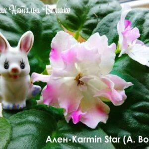 Ален-Karmin Star (А. Вольская)