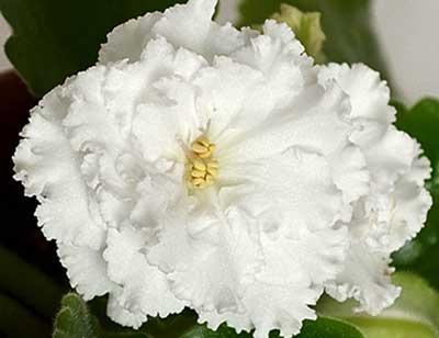 ЕК-Сахарная Роза (Е.В. Коршунова)