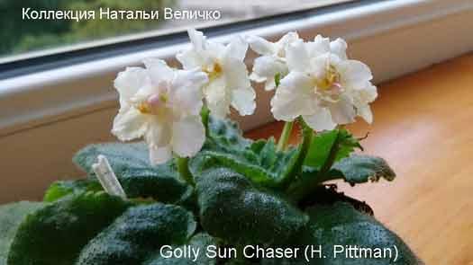 Golly Sun Chaser (H. Pittman)
