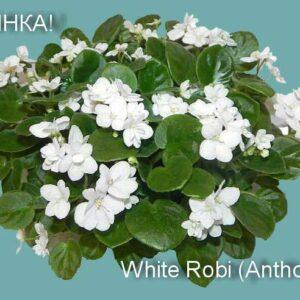 White Robi (Anthoflores)