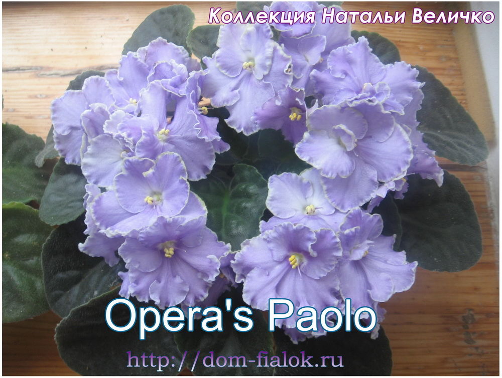Opera's Paolo (D. Burdick)